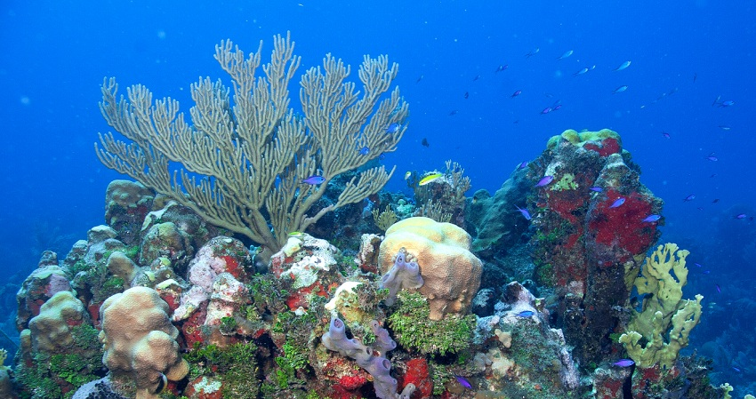 What are the best places to scuba dive in Cuba?